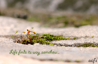 life finds its way... | by Asif-