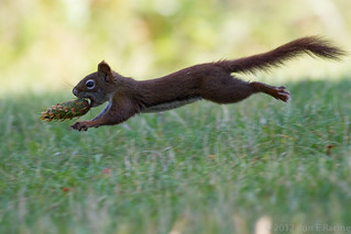 Squirrel Olympics | by rracine1