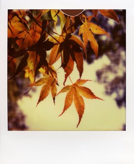 px70 v4b test film | by er_code_blue