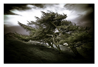 Trees in the wind II, Lomond Hills | by euan1234