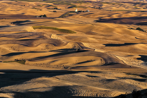 Palouse Wheat ready for harvest | by The Knowles Gallery