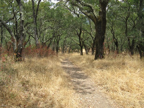 Sonoma Valley Regional Park, Corridor Ridge Trail | by Transit&Trails