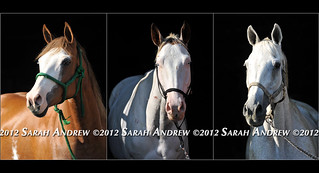Three Portraits at Camelot Auction | by Rock and Racehorses