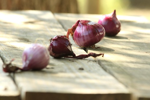 Onions | by lacybekah