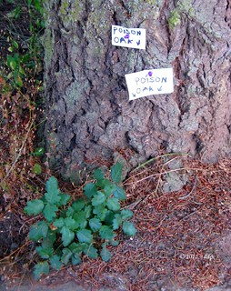 Poison Oak!!! Did We Really Need Two Signs? | by Pixel Packing Mama ~ 25 Million Views