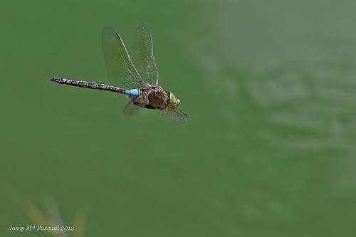 Volant - Flying | by McGuiver