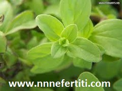 Marjoram Effectiveness and Benefits | by nnnefertiti