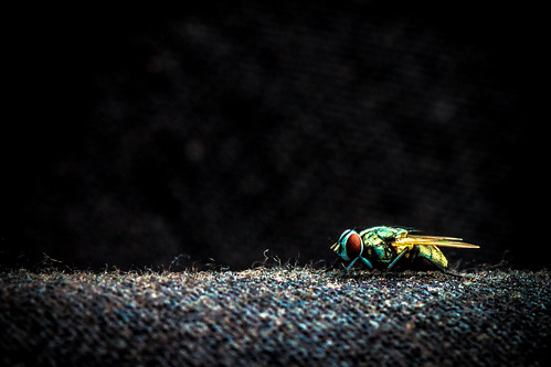 Fly on my pants | by Romain Pampelonne