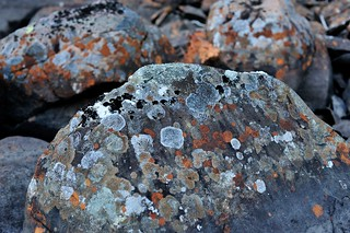 Boulders with Lichen | by Peter Bowers