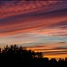 Wardley sunset