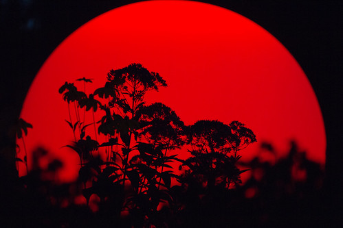 Red Light and Plant | by kirberich