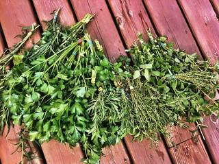 I also harvested ALL THE HERBS. (Parsley, anyone?) | by angellaD