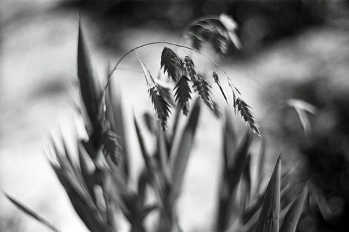 Late Summer Grass | by Baisao