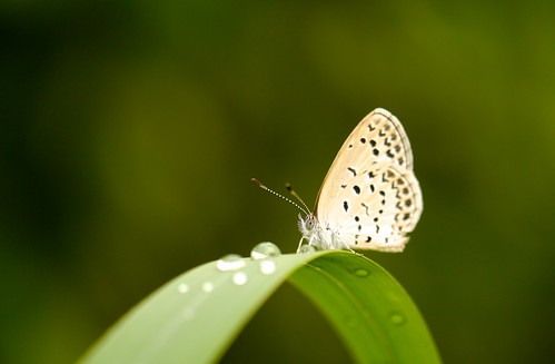 Pale Grass Blue | by Yorkey&Rin