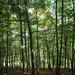 Oasi Zegna, Il Bosco del Sorriso - Forest of Smiles