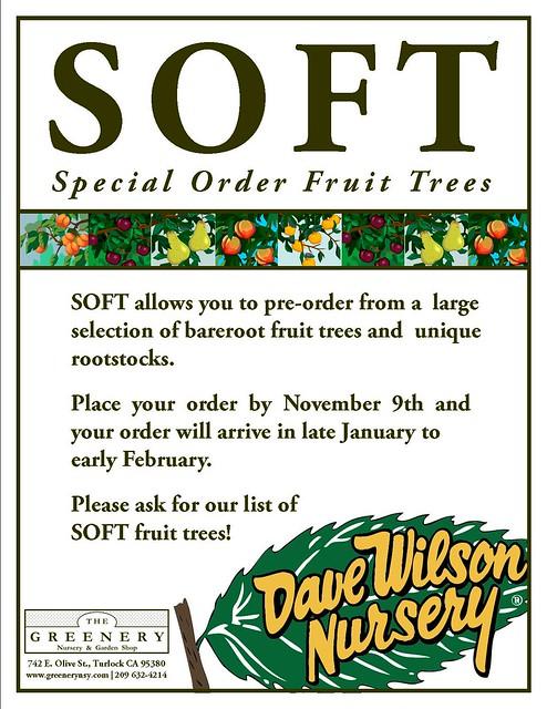 Mail Order Fruit Blood Orange Groves Delray Beach Florida