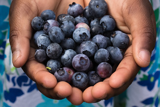 Blok Orchards Blueberry Picking July 21, 2012 13 | by stevendepolo
