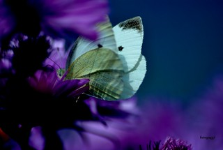 Butterfly'sDreamland | by fotoguggi >> >>> thank you all