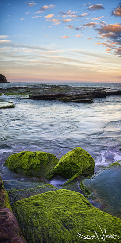 Moss @ Sunset | by Daniel Willans