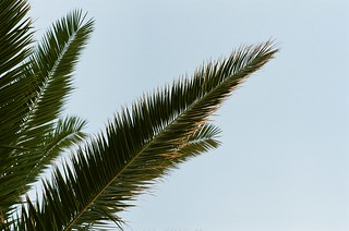 Palm | by DavidTrebicky
