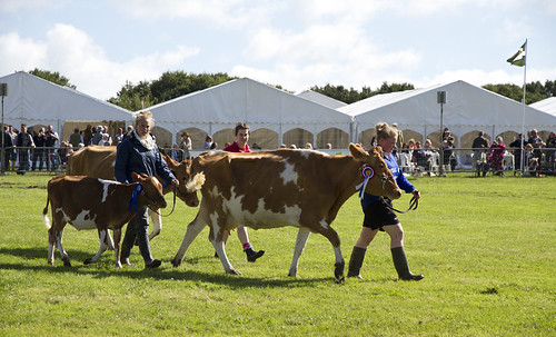 award-winning cows at honiton show 2012 | by dohlongma