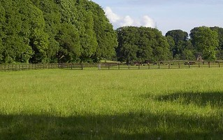 Horse Property Tree Services: Would you pay a Business to Guide you on Your Horse Property?