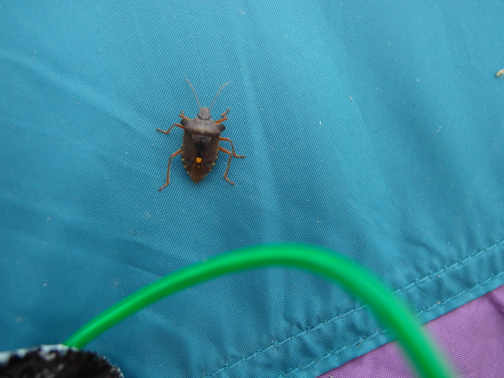 Friendly bug on tent with EL wire | Heather | Flickr