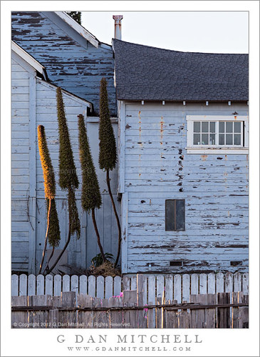Weathered Blue Building, Fences, and Plants | by G Dan Mitchell