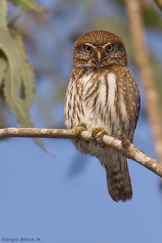 sextreffen owl sexkaufhaus mg