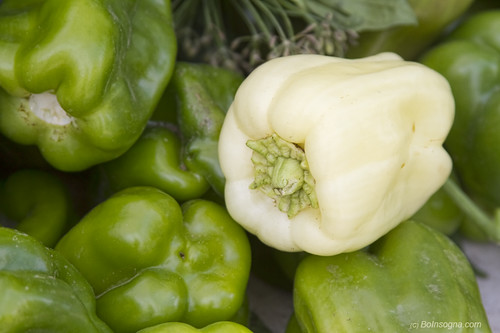 Albino Bullnose Pepper | by Striking Photography by Bo Insogna