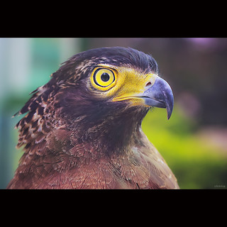 Eagle Eye | by -clicking-