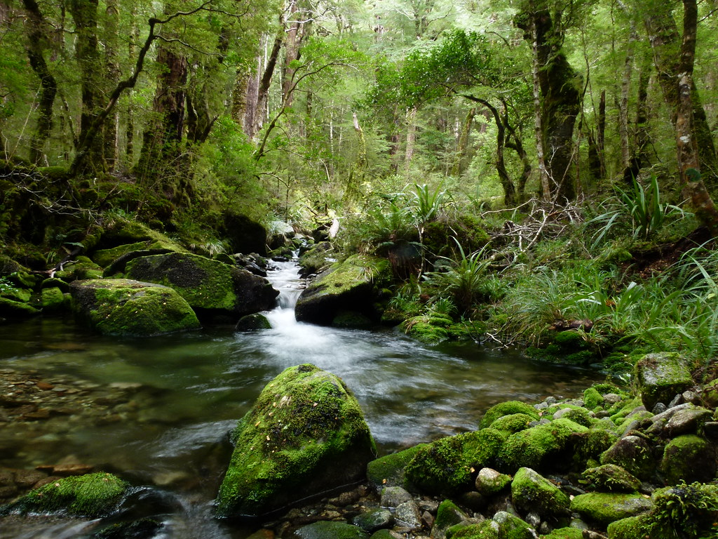 Rahu river klondyke valley the right branch of the for Landscape jobs nz