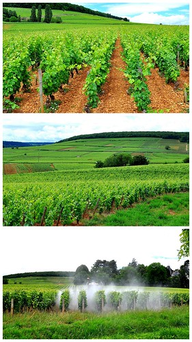 Burgundy, France Collages | by Cathy Chaplin | GastronomyBlog.com