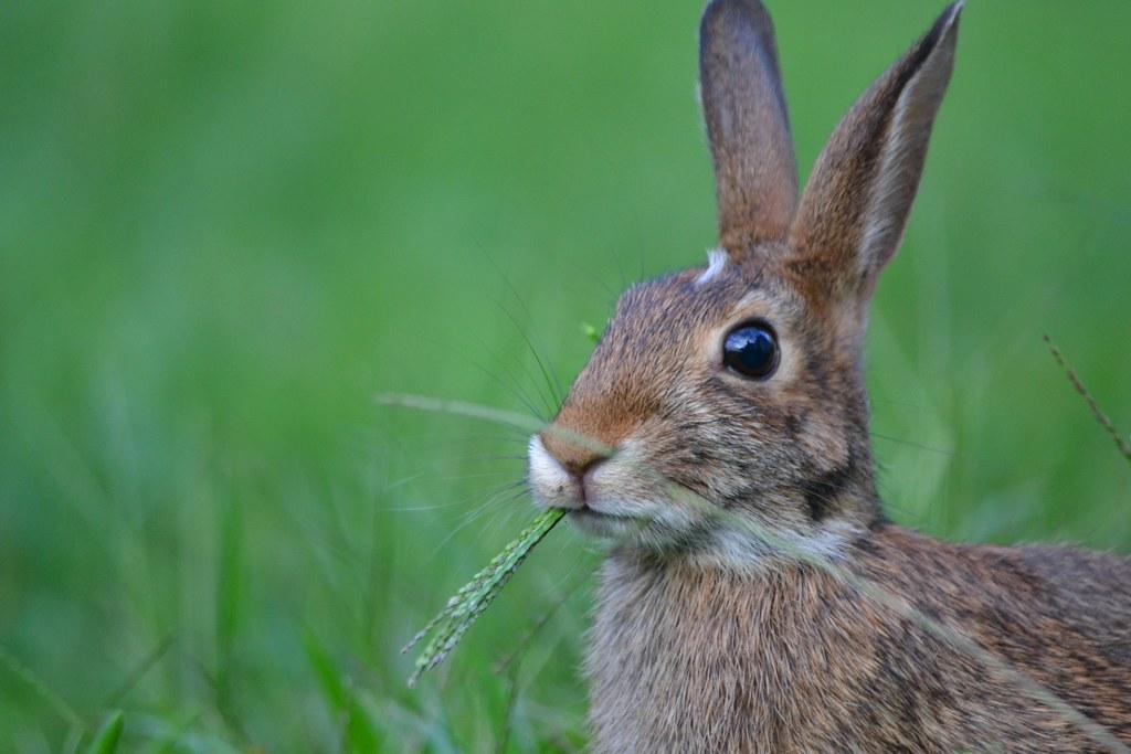 Rabbit Create Chat Room