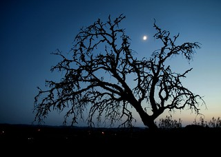 Moonlight and tree | by ccgd