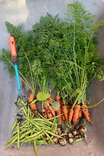 Carrots, green beans and onion | by @abrunvoll