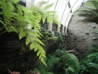 The Fernery, Benmore | by jo mclure