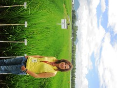 Dr. Sigrid Heuer, leader of the research team at the International Rice Research Institute (IRRI).