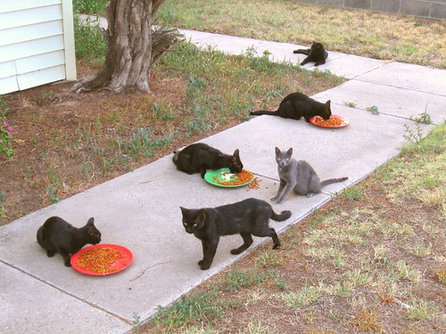 Six stray cats, dropped in for supper | by Hairlover