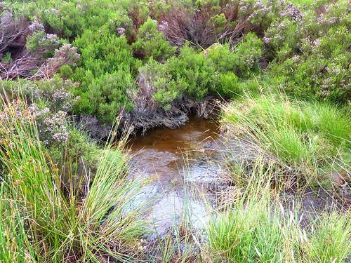 Plaine d'Uovacce : le ruisseau dans les bruyères