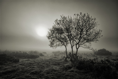 Misty Morning | by MartynHall ∂Ξ(Gaining interest)
