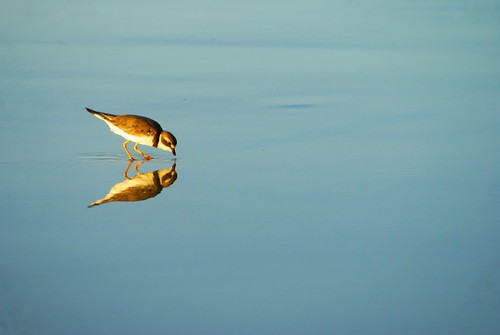 I Could Be That Bird | by Giancarlo Lalsingh