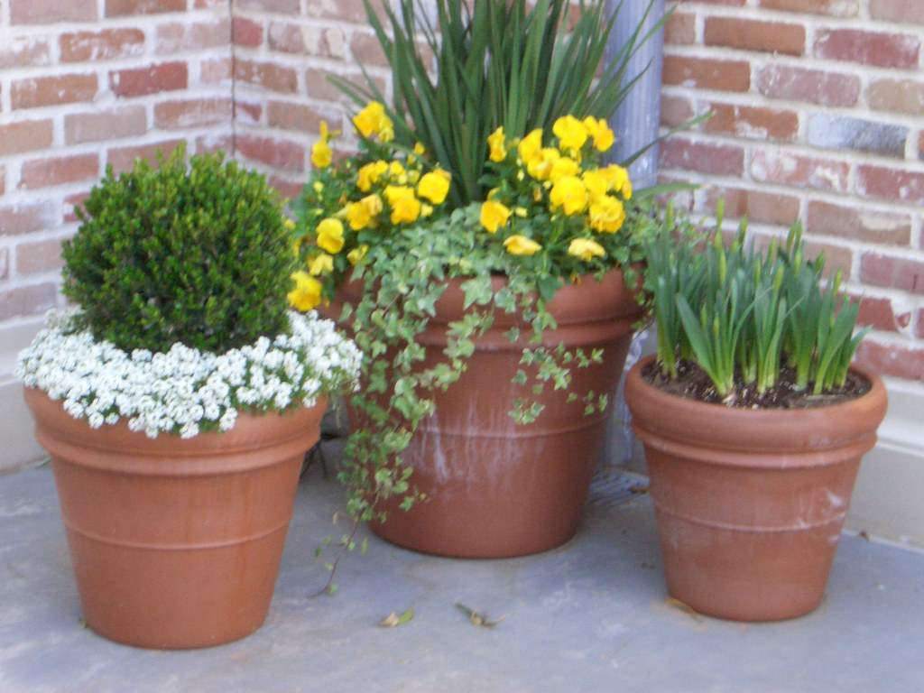 Beautiful potted plants seen at the houston azalea home for Beautiful planters