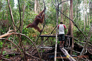 Orangutan World, Tanjung Puting Borneo Adventure-87.jpg | by OURAWESOMEPLANET: PHILS #1 FOOD AND TRAVEL BLOG