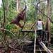 Orangutan World, Tanjung Puting Borneo Adventure-87.jpg