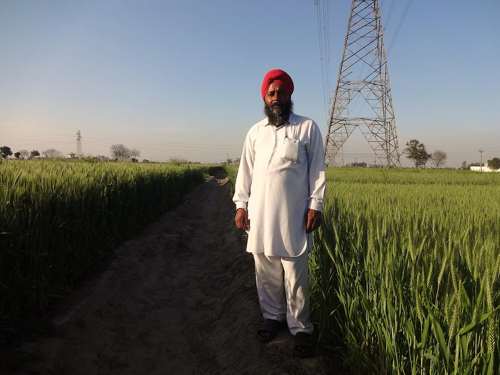 Baldev Singh with last year's crop.