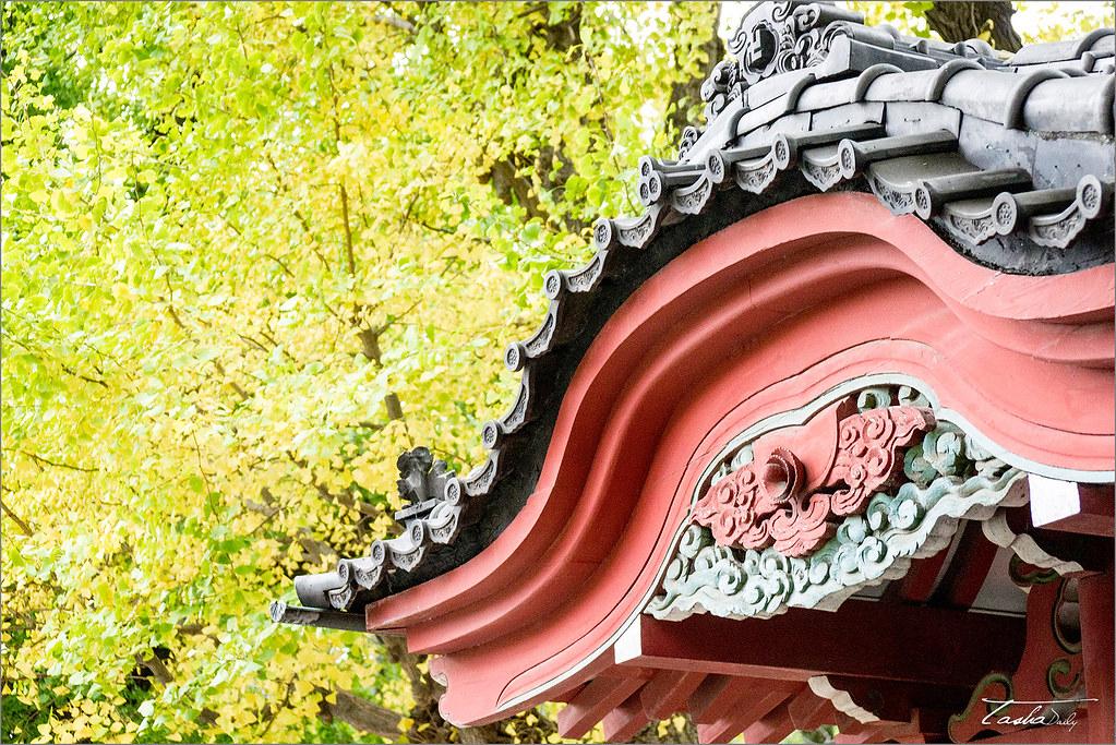 東京自由行︱淺草寺 水子地蔵尊.悠靜閒適的寺院銀杏