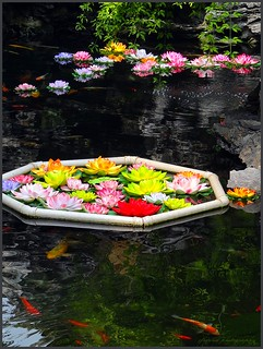 The lotus pond with Koi carps in the Jade Buddha temple - Shanghai (6 pictures) | by jackfre 2