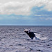 Whale Watching! 1