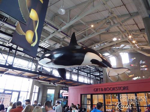 160703f Monterey Bay Aquarium _003